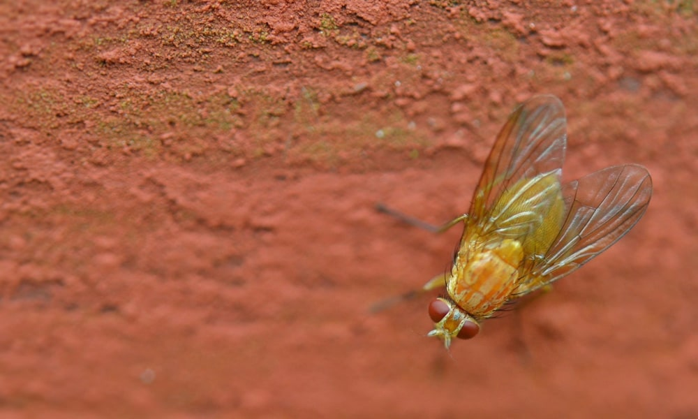 Learn How to Get Rid of Flying Bugs in Your Yard